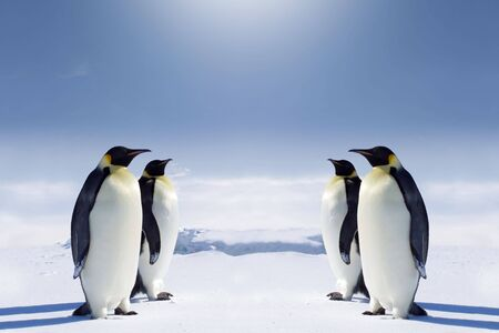 Two pairs of penguins facing each other at the South pole. photo