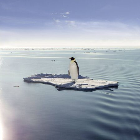 Emperor Penguin on a floating ice floe Stock Photo - 2957498