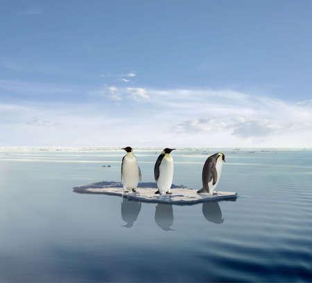 überleben: Der letzte Pinguin �berlebenden.  Lizenzfreie Bilder