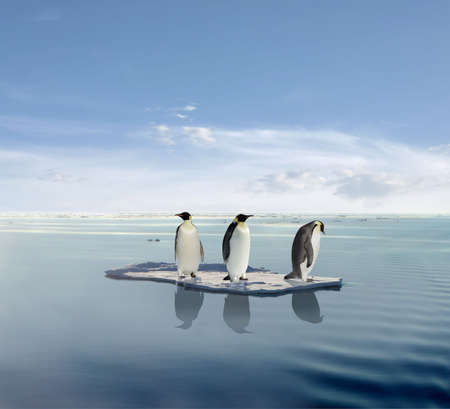 The last penguin survivers.