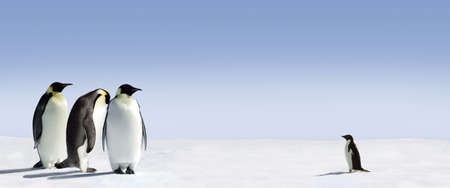large bird: Three emperor penguins are met by an adelie penguin