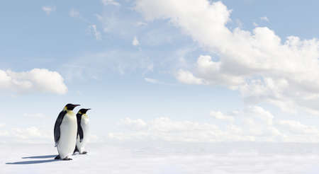 Penguin Panorama with copy space