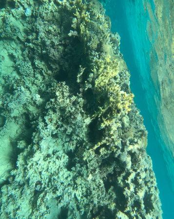 Underwater photography in the Red Sea in the Jordanian city of Aqaba Zdjęcie Seryjne