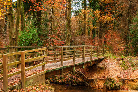 Autumn wood with a bridge and small stream photo
