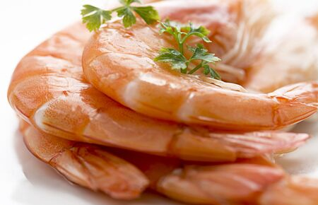 prepared shellfish: close up of king prawns on a white plate with a shallow depth of field shot in window light