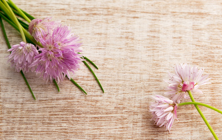 message board: Pretty pink blossom  with the chive herb, on light wooden background. Top view with copy space,  shot for message board