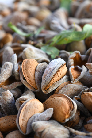 newly harvest shelled almonds in husk , macro full frame vertical image  focus on subject blurred background and foreground to ad copy space