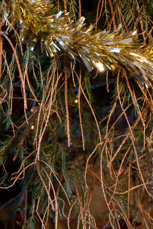 vertical image of Christmas tree with fallen pine needles shedding from the branches of an uncared for plant . copy space in background