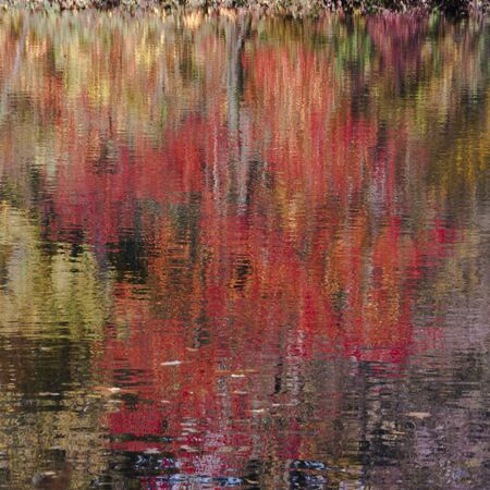 farbe: Red cherry tree reflected in river Limmat, Zurich, Switzerland