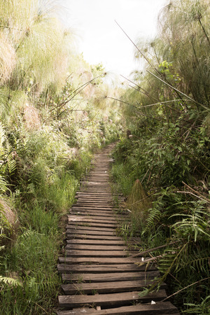 walking trail: A walking trail is leading along a swamp into the African jungle. Stock Photo