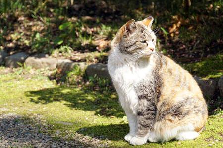 Cat in the park.