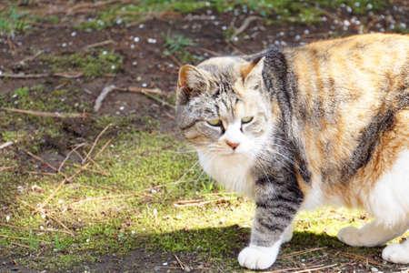 Cat in the park. Cat glares. Stock Photo