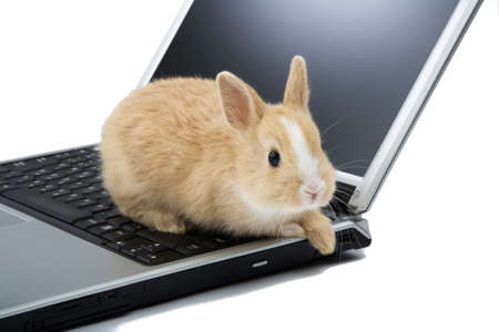 bunny on the laptop, isolated photo