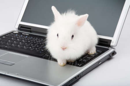 white  bunny on the laptop, isolated photo