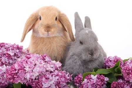 two bunny among the purple lilac