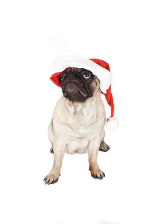 pug in santa hat Stock Photo - 1666519