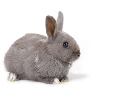 grey bunny on the left side