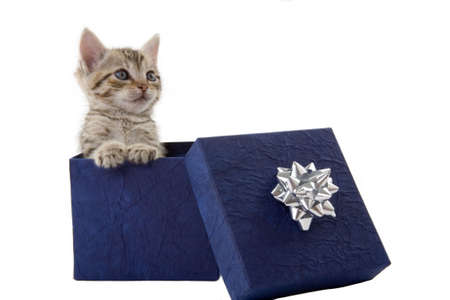 weeks: kitten (5 weeks) in a blue gift box Stock Photo