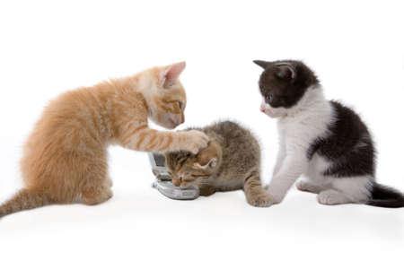 three kitten talking on a phone Stock Photo