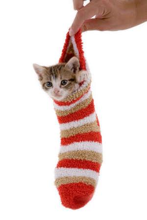 kitten in the striped socks