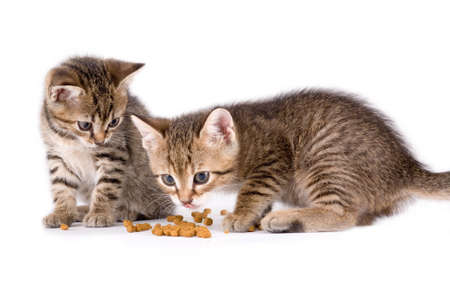 grey haired: two eating kittens