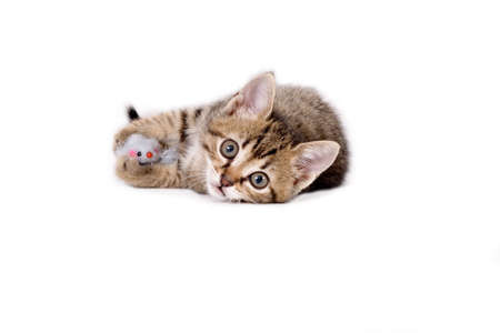 striped kitten and his mouse toys Stock Photo