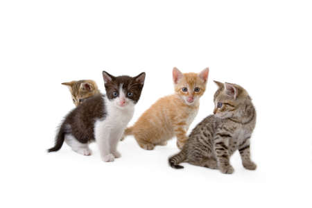 four kittens sits on the floor, isolated Stock Photo