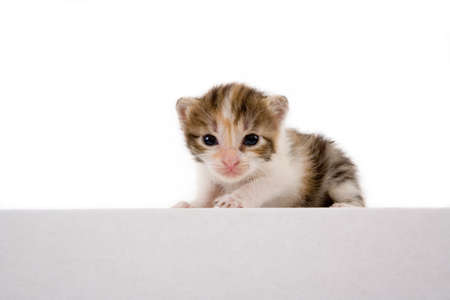 weeks: 3 weeks striped kitten, isolated