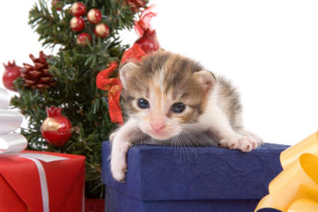 3 weeks striped kitten and a christmas tree and some gift box photo
