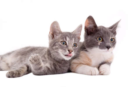 two kittens lying down, isolated