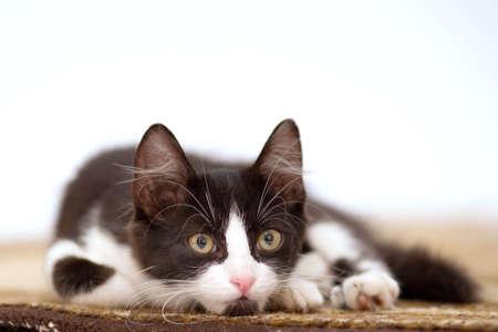 grey haired: kitten standing on the carpet