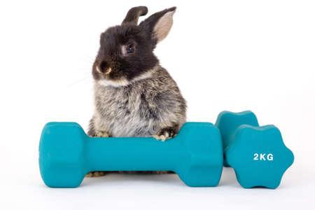 animalitos tiernos: Bunny y un peso