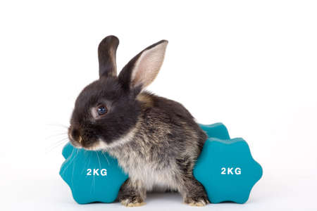 animal breeding: bunny and a weight