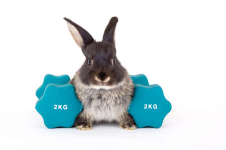 lapin blanc: Bunny et un poids Banque d'images