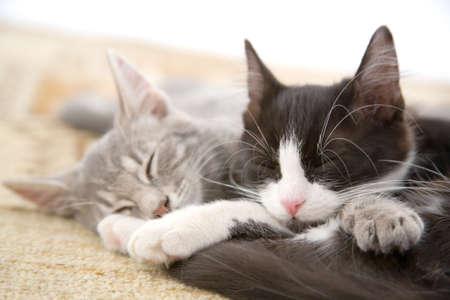 sleeping kitten brothers