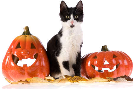 two halloween pumpkins and a cat Stock Photo