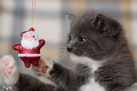 grey kitten playing with an little santa claus Stock Photo