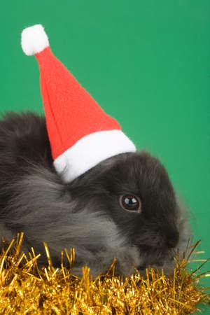 grey bunny in santa hat and gold garland photo
