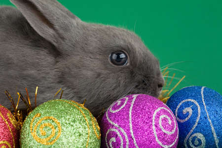 grey haired: grey bunny and christmas decorations on green background Stock Photo