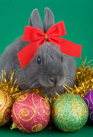 grey haired: lying grey bunny wearing a red bow and christmas decorations