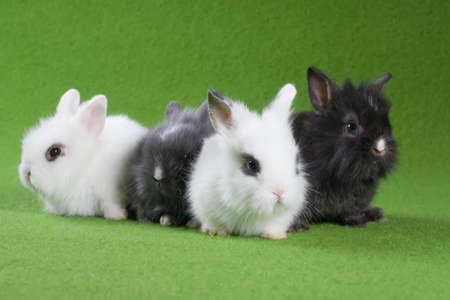 four bunny, isolated on green background photo