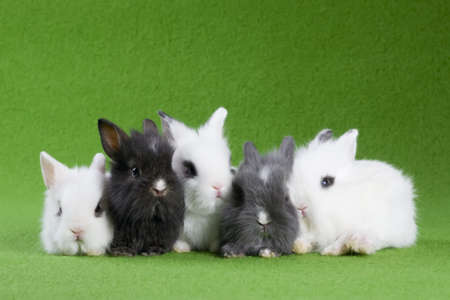five bunny, isolated on green background photo