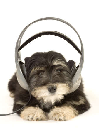 puppy listening to music with headphones Stock Photo