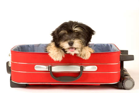 valise: puppy in the suitcase Stock Photo