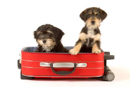 maletas de viaje: Dos hermanos de cachorros Linda en la maleta