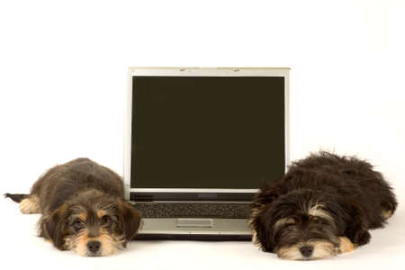 Two cute puppies brothers and a laptop, isolated