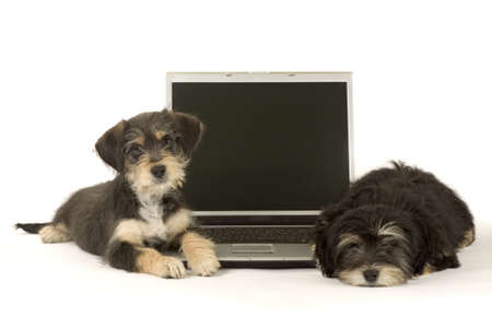 Two cute puppies brothers and a laptop, isolated photo