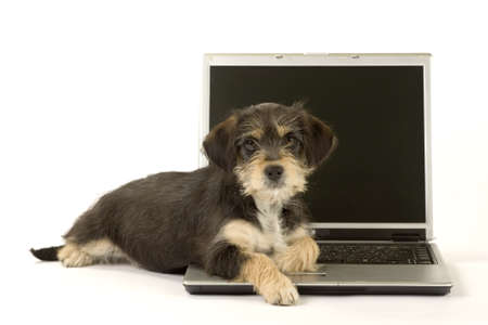 cute puppy and a laptop, isolated
