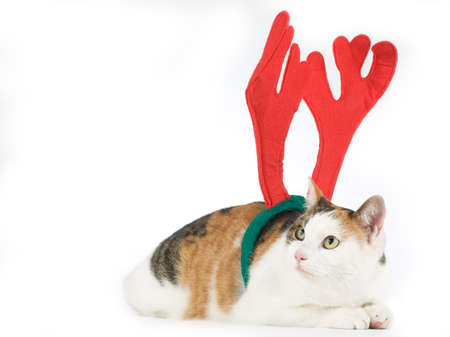 cat dressed as a reindeer Stock Photo