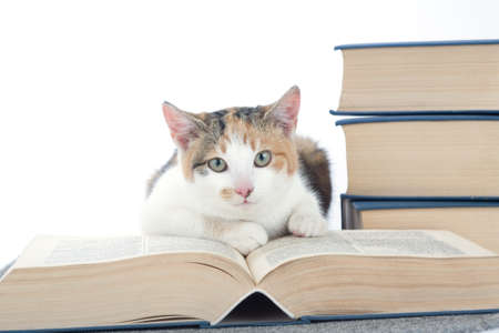 spotted cat and books, isolated